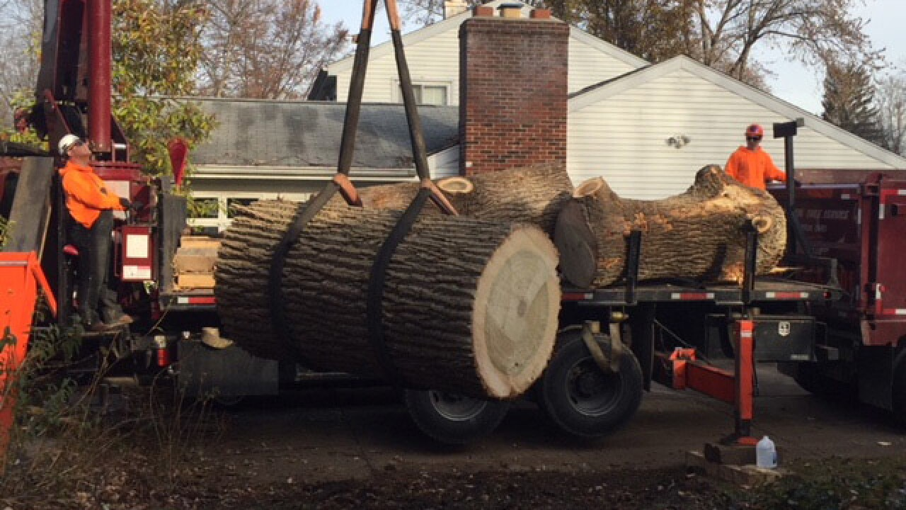 'Angels' remove tree that fell on home for free