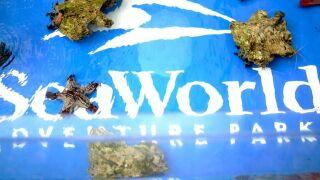 Seaworld park