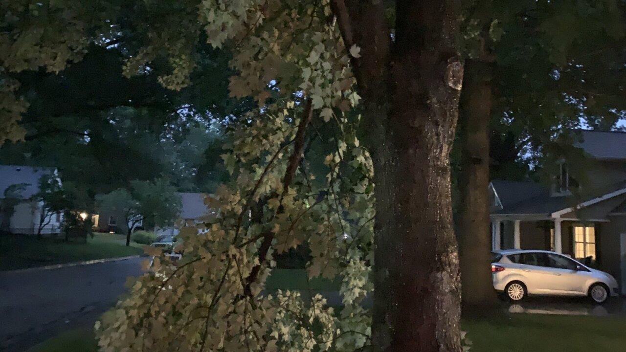 Roeland Park tree damage Joseph Arduini.jpeg