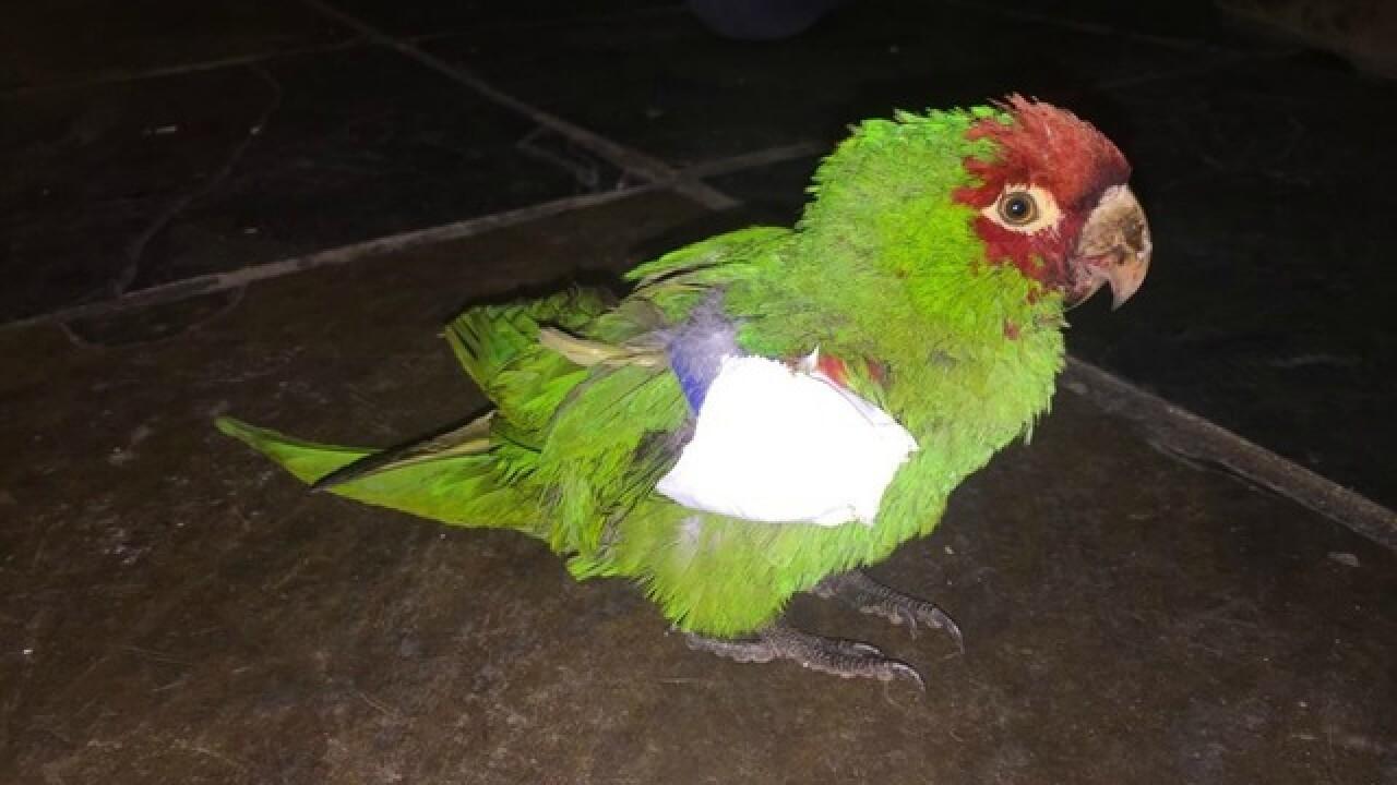 PETA offers reward in local parrot shootings