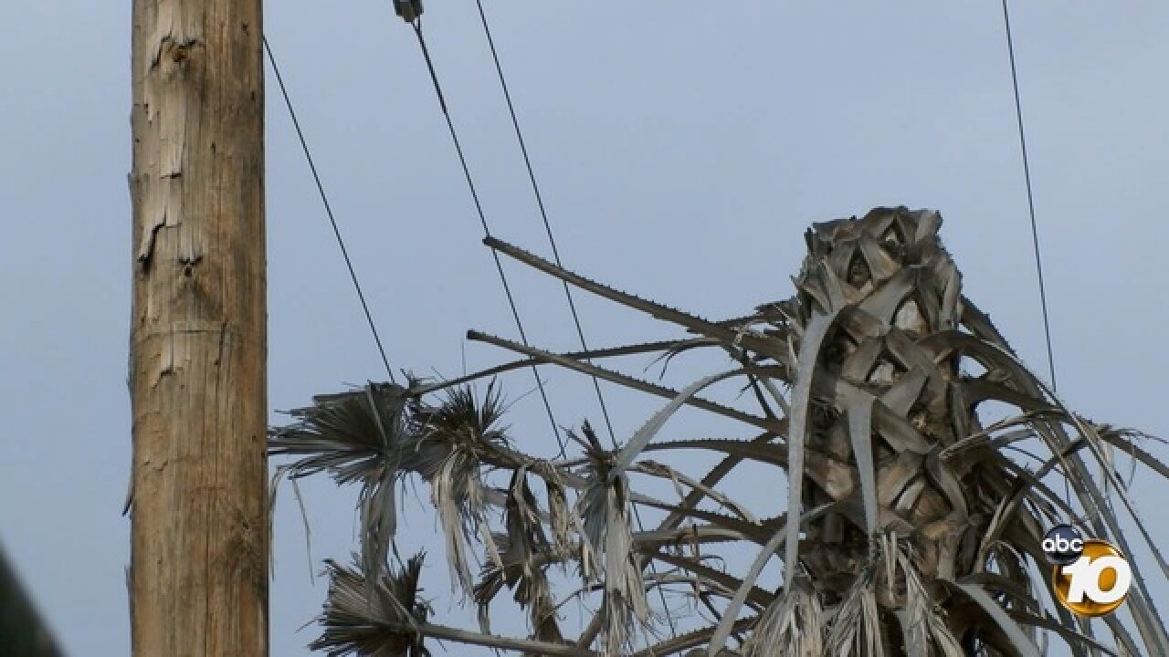 South Bay woman pushes to get dead palm trees removed underneath power lines