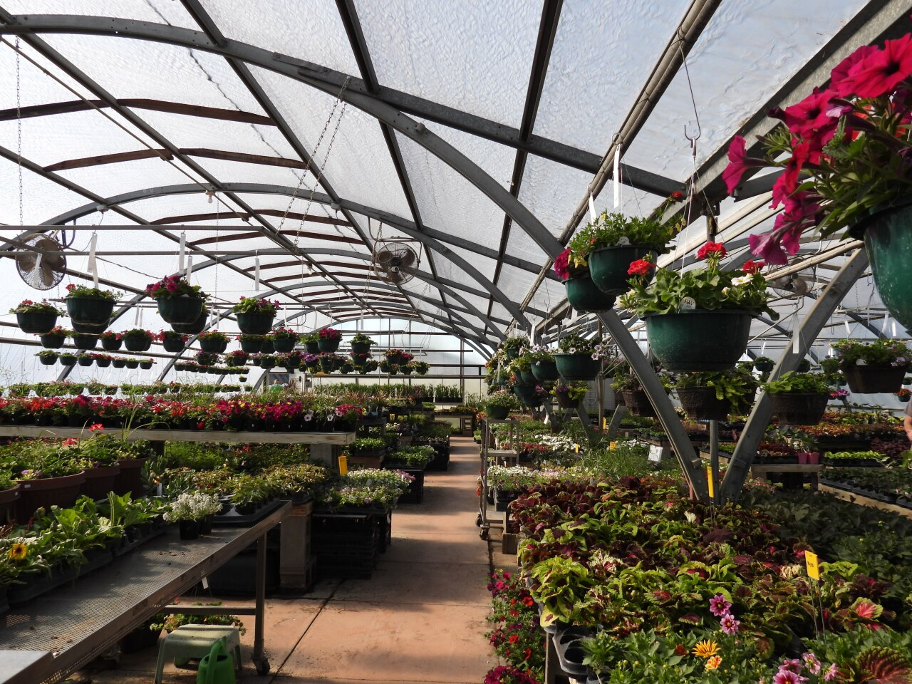 Wenninghoff Farm's greenhouse