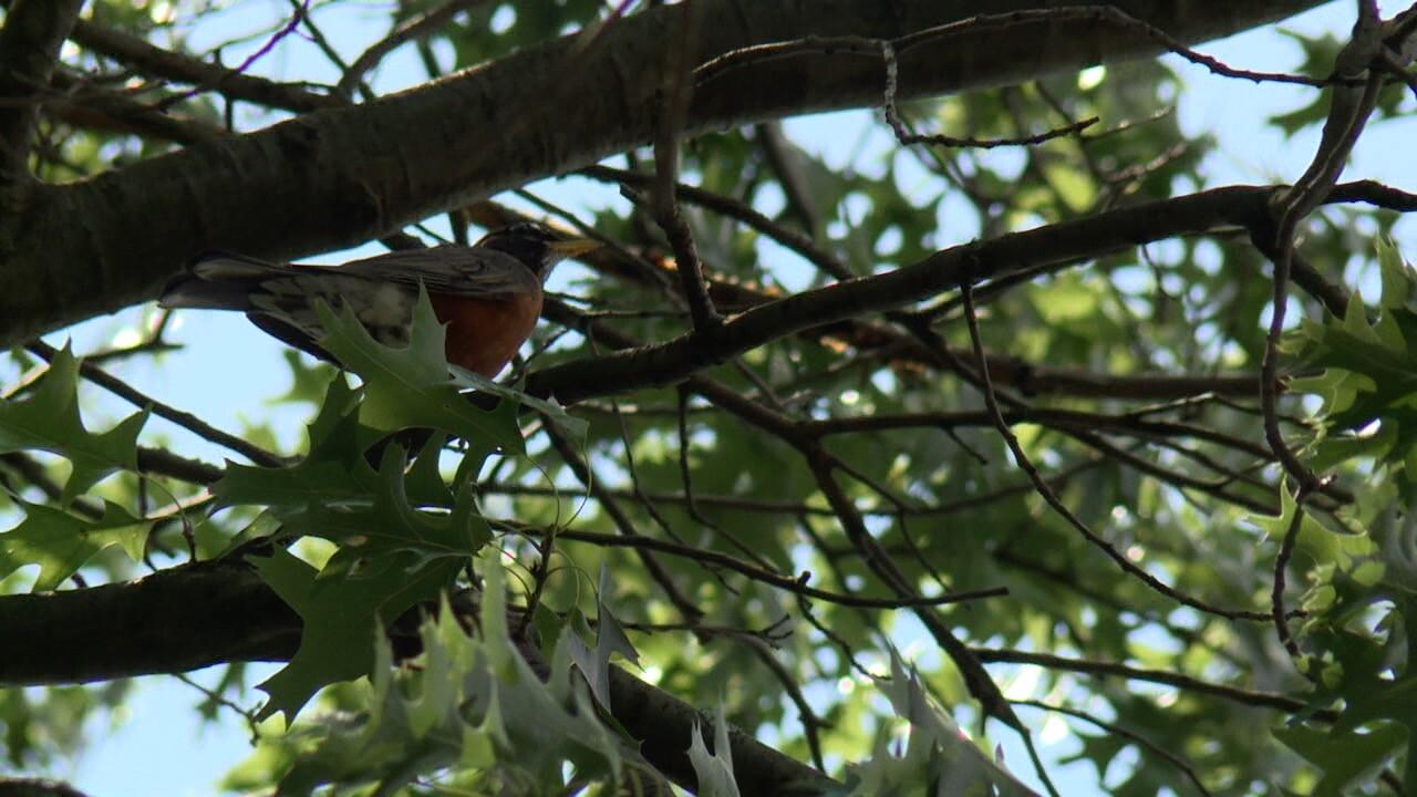 bird illness 1.jpg