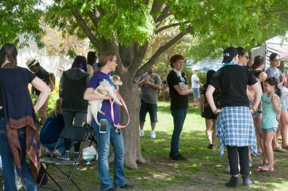 Photos: PETA's 'Poochella' adoption festival returns to Norfolk dogpark