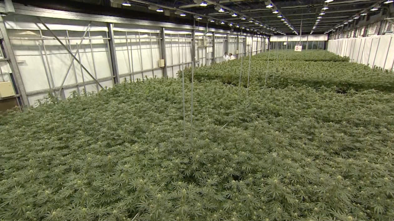 Marijuana warehouse.png