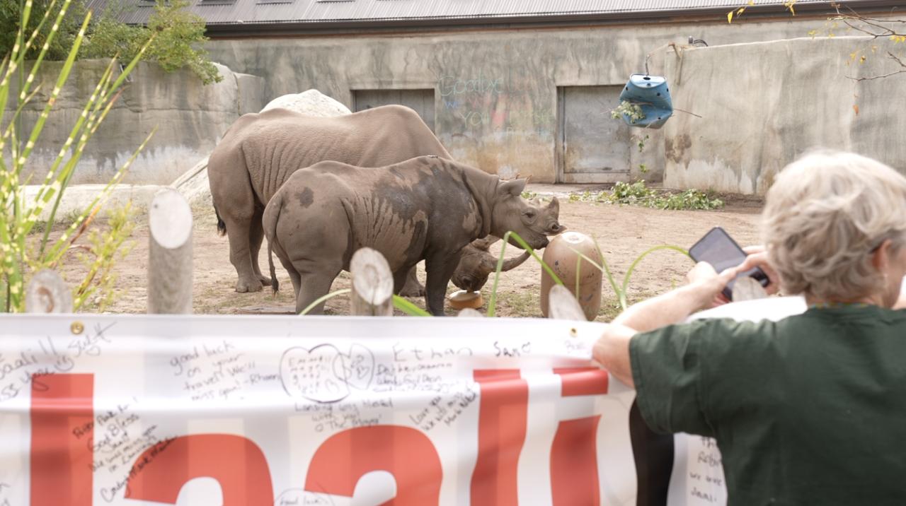 Jaali's goodbye party at Potter Park Zoo