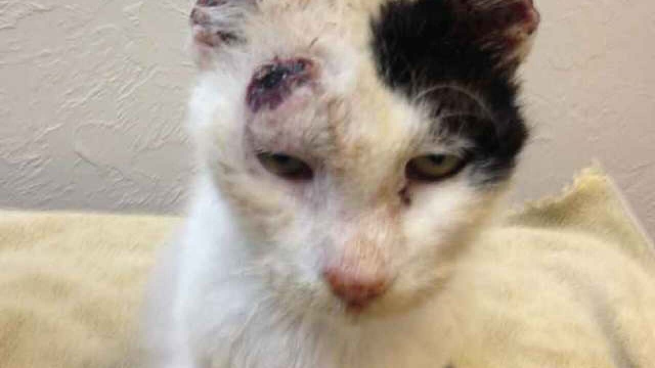 Couple finds cat with almost no ears