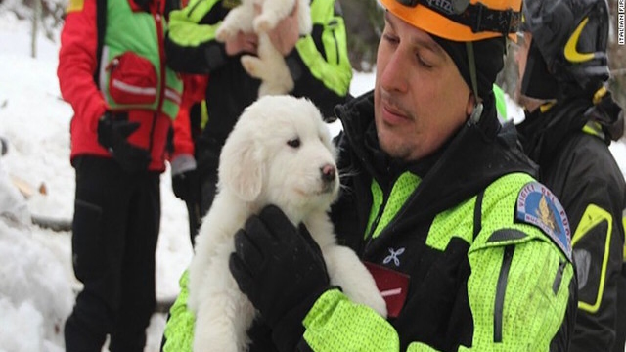 Puppies rescued from avalanche site