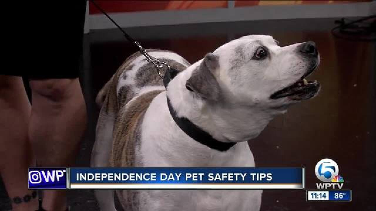 Keep your pets safe on Independence Day