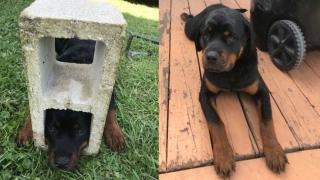 dog in cinder block