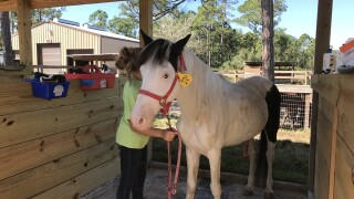 Neglected horses rescued from property; now recovering in South Florida
