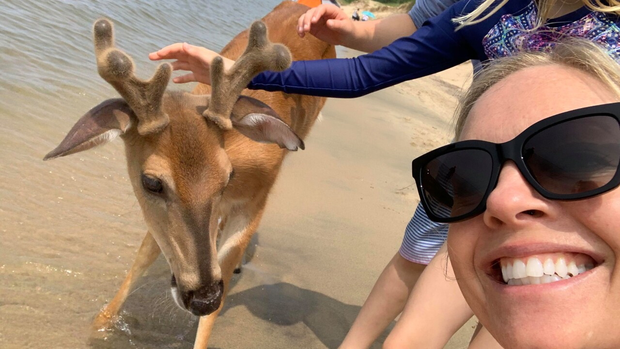 Deer joins beachgoers on Lake Michigan for summer water fun