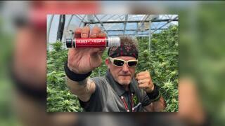 DarrenMcCartymarijuana.jpg