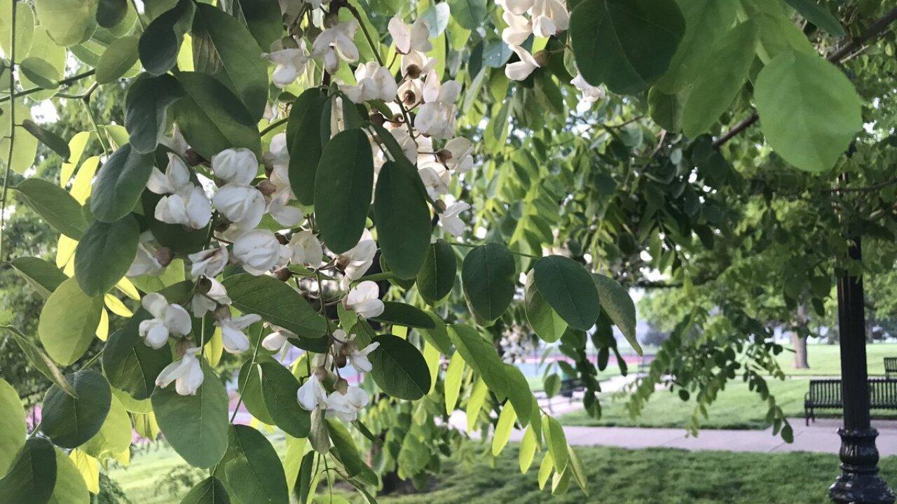Tree Pollen allergies.jpg