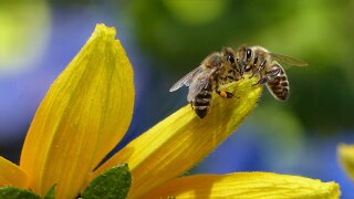 WCPO bees honey honey how you thrill me.jpg