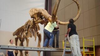 Museum Mammoth