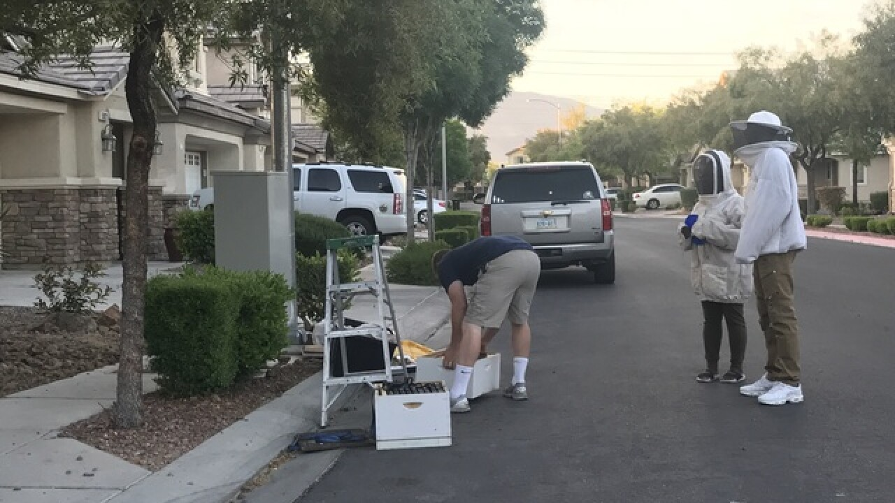 Thousands of bees swarm in front of NLV home