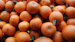Halloween sadism a myth, expert says - no cases of children injured by candy