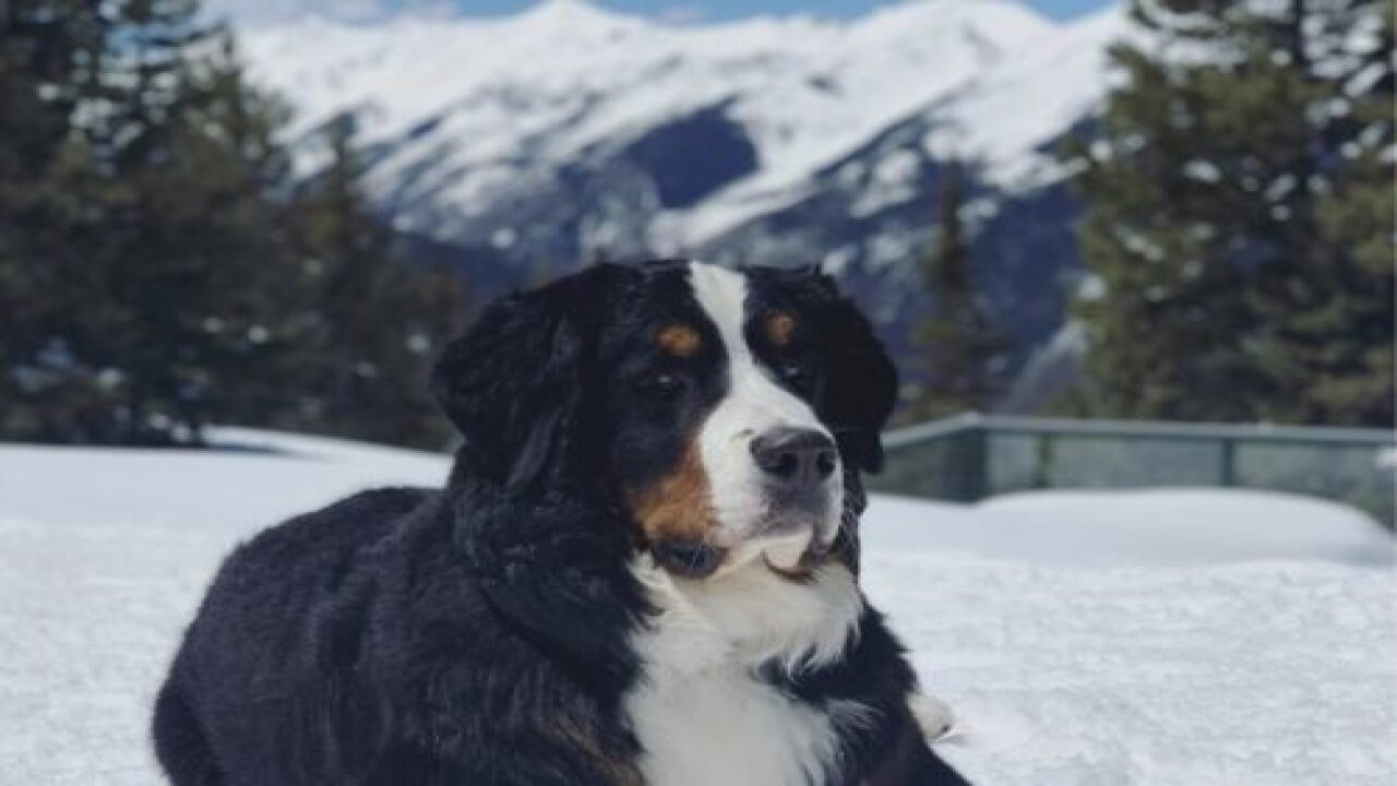 This Colorado Hotel Is Hiring A Butler To Look After Its Dog Mascot