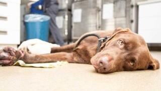 SRPD dog euthanized