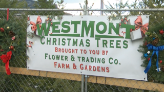 West Mont takes over annual Helena Christmas tree lot