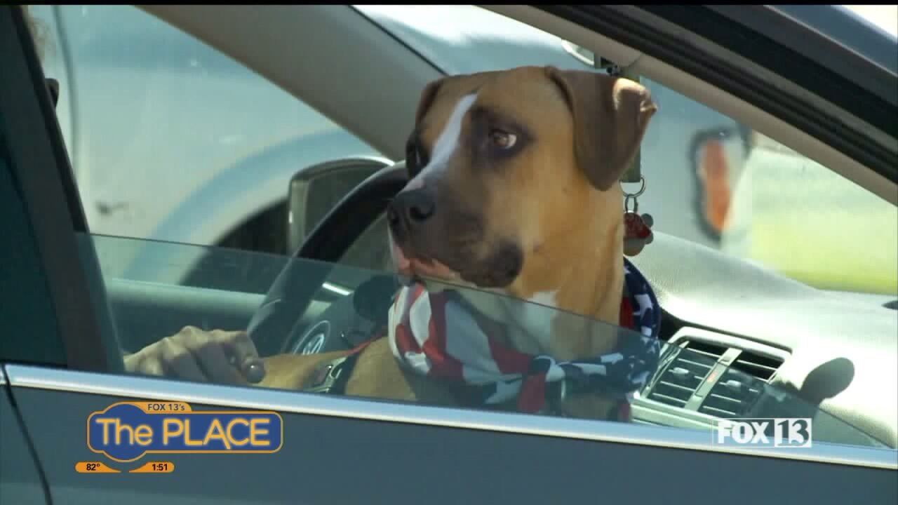 What to do if you spot a dog in a hot car