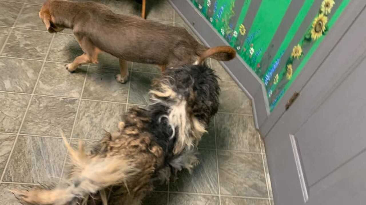 coffee county animals neglected
