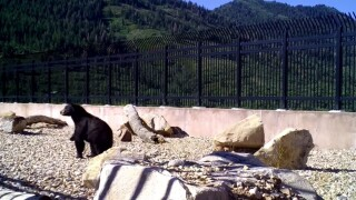 Wildlife overpass in Utah proves successful at helping animals safely cross interstate