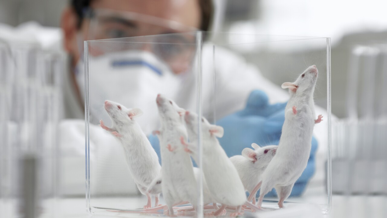 Researchers eliminate HIV from the DNA of infected mice