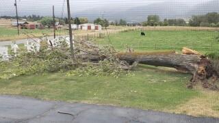 Ravalli Tree Down