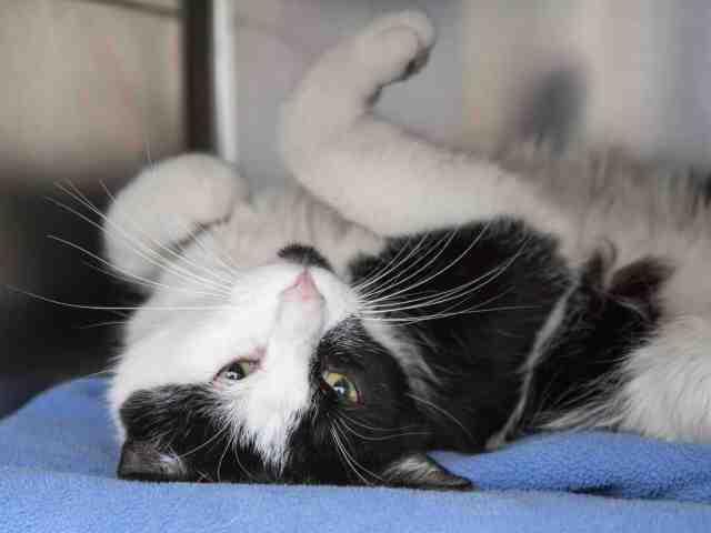 Adoptable pets at Arizona Humane Society and Maricopa County Animal Care (6/27)