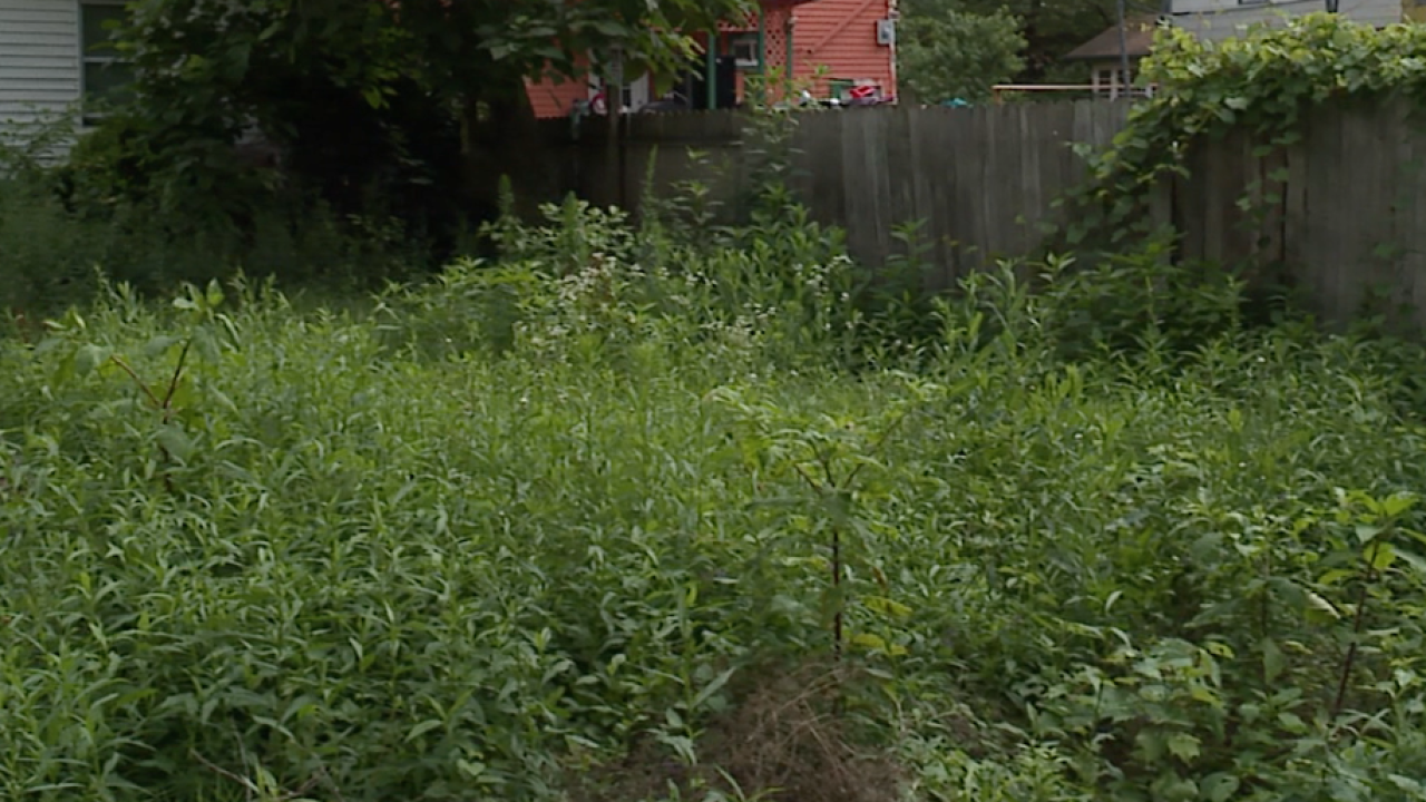 CLE residents angered over unkempt over-grown alleyway issues