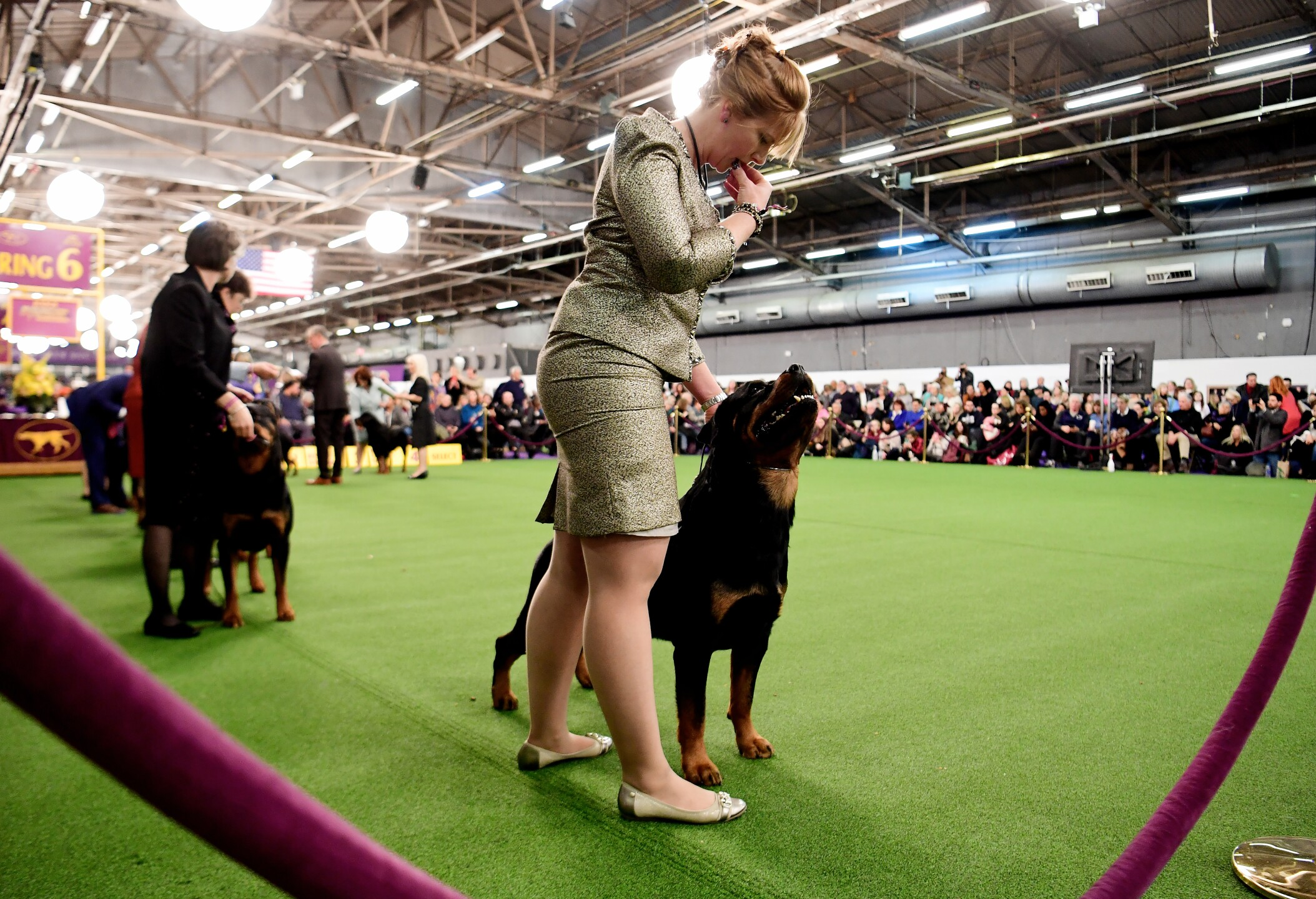 Westminster Kennel Club Hosts Its Annual Dog Show In New York