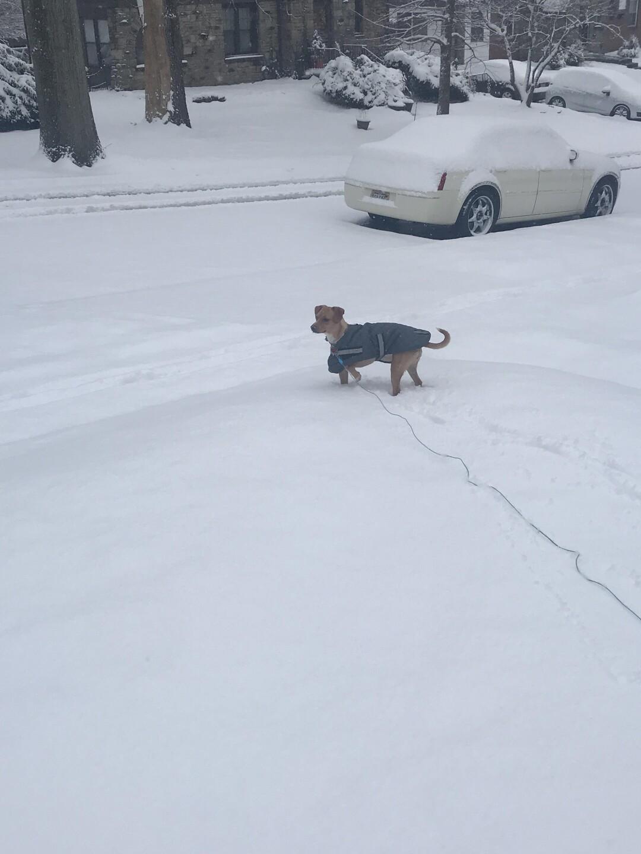 paddock_hills_snow.jpg