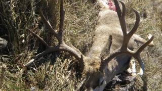 Four trophy deer poached, left to waste north of Hardin