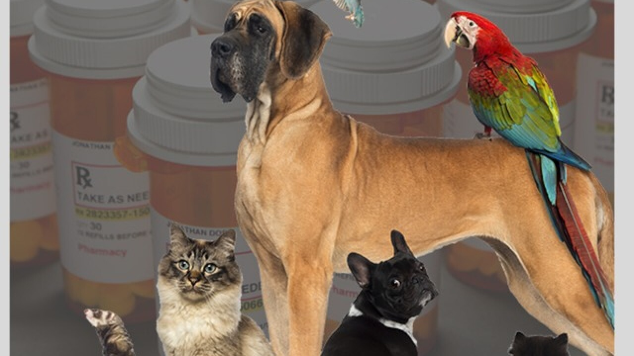 FDA warns of pet owners using animals to get opioids