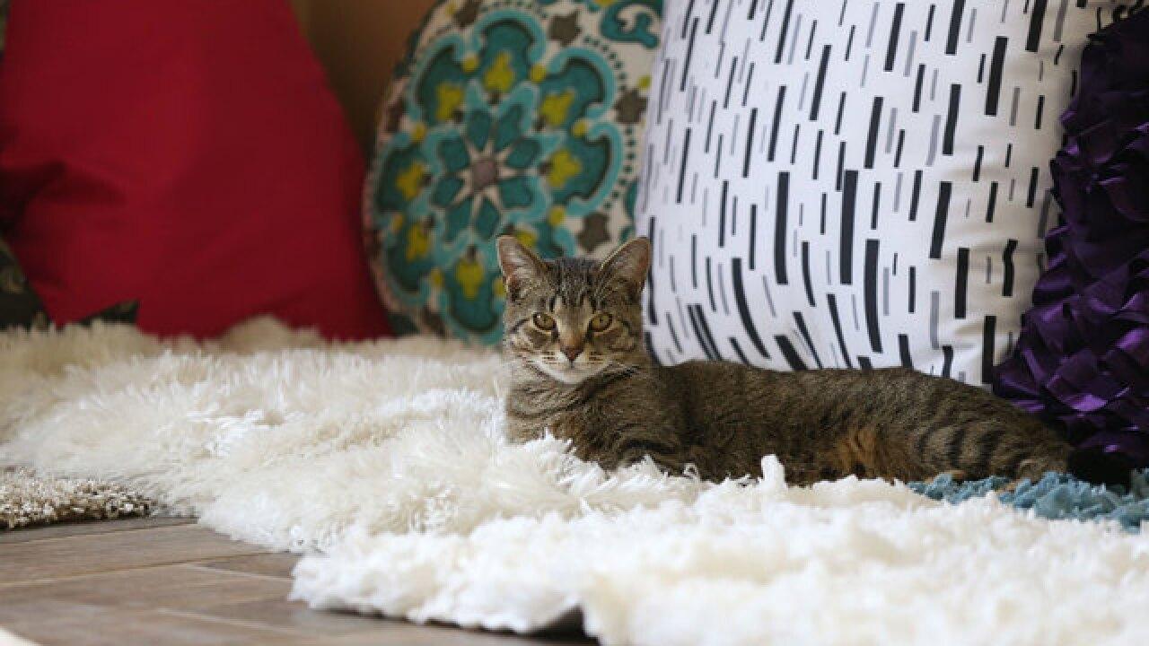 Mason 'Cat Cafe' close to reaching 400 adoptions