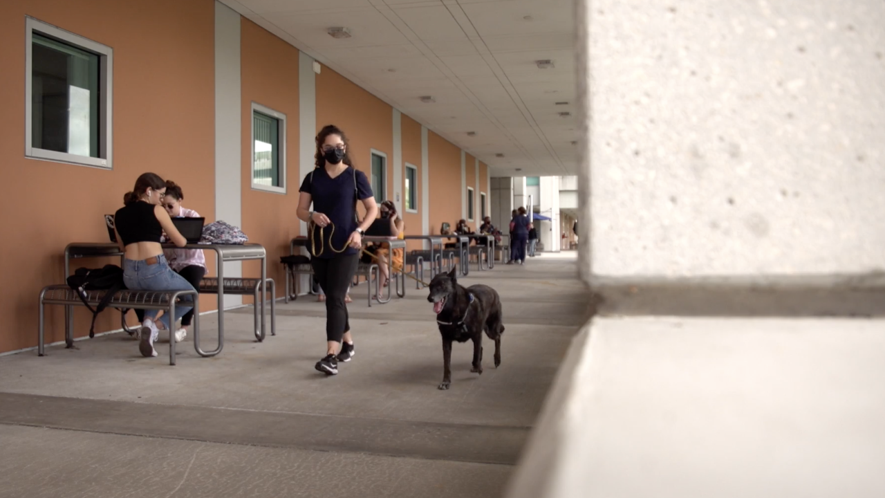 One Betta, along with three other dogs, completed the forensic detector training and are now used around the university's more than 340-acre campus, with nearly 58,000 students. When she smells the presence of COVID-19, she signals her handler.