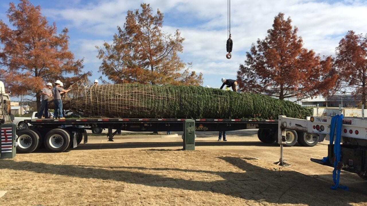 Claremore's 50 Ft. Live Christmas Tree Arrives For 'West