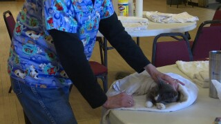 Cat clinics aim to reduce stray population in Great Falls