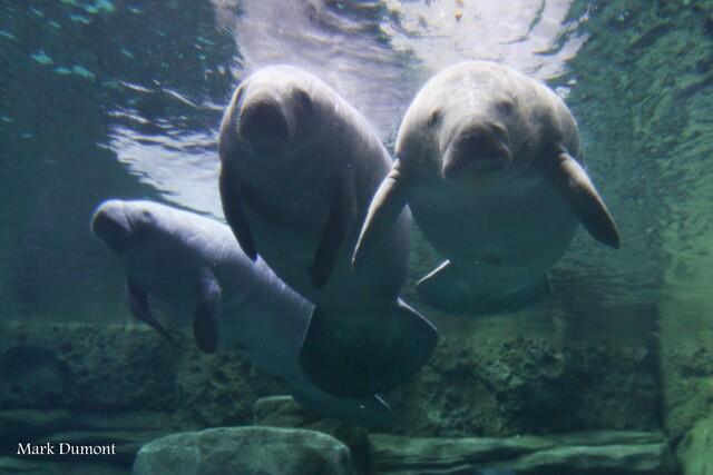 The adorable faces of 2018 Cincinnati Zoo Babies