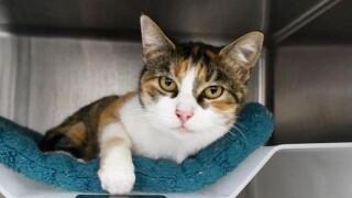 Montecito Disaster-Cat Found