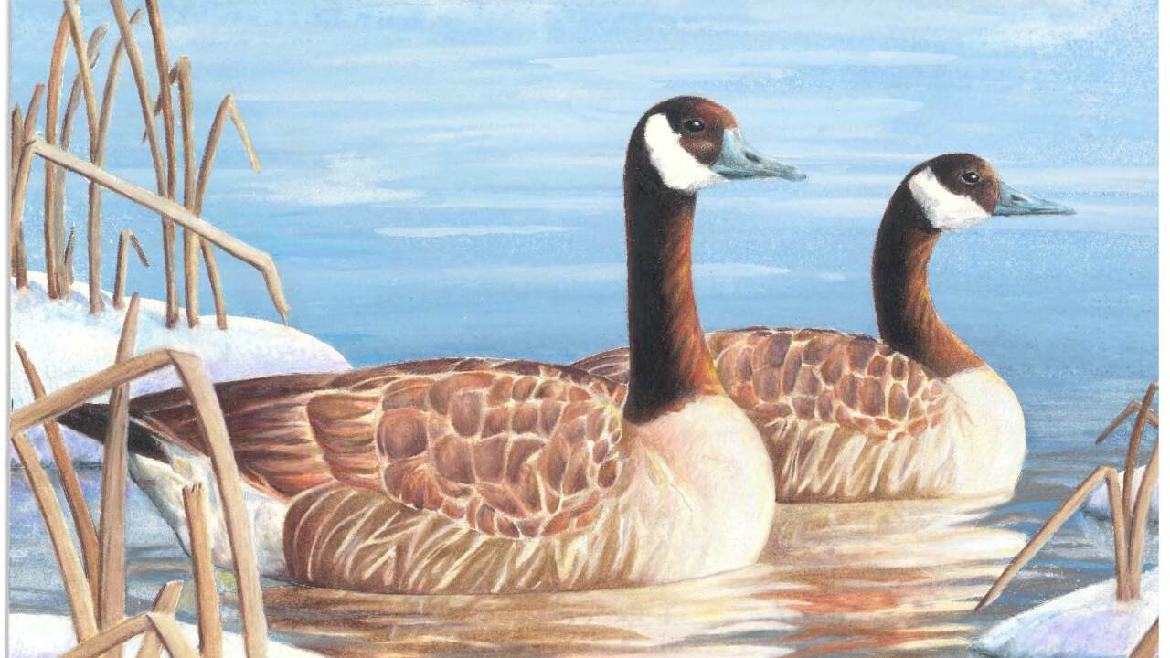 Ogden teen wins 2016 Utah Junior Duck Stamp Contest