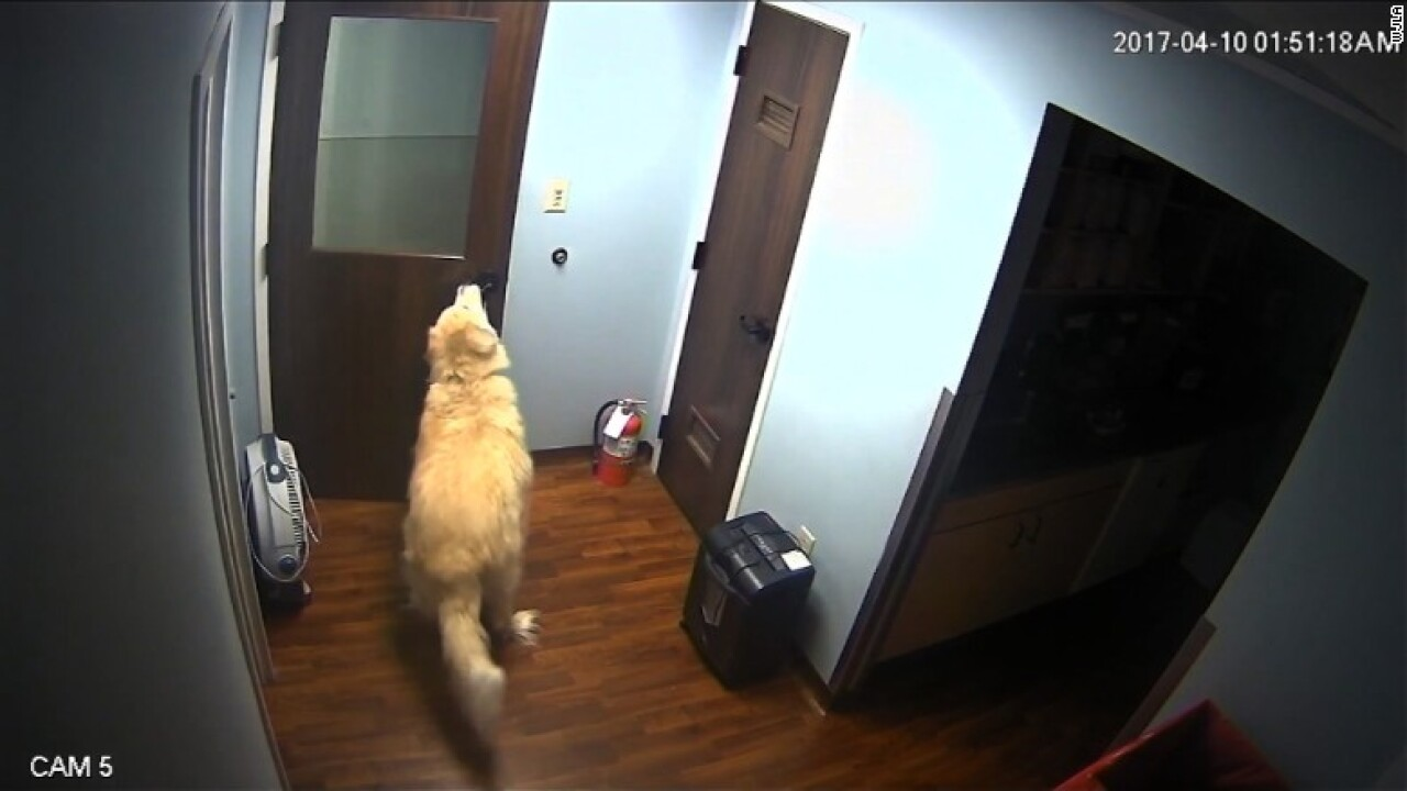 Dog escapes Virginia animal hospital by opening severaldoors