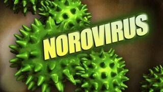 Norovirus generic.jpg