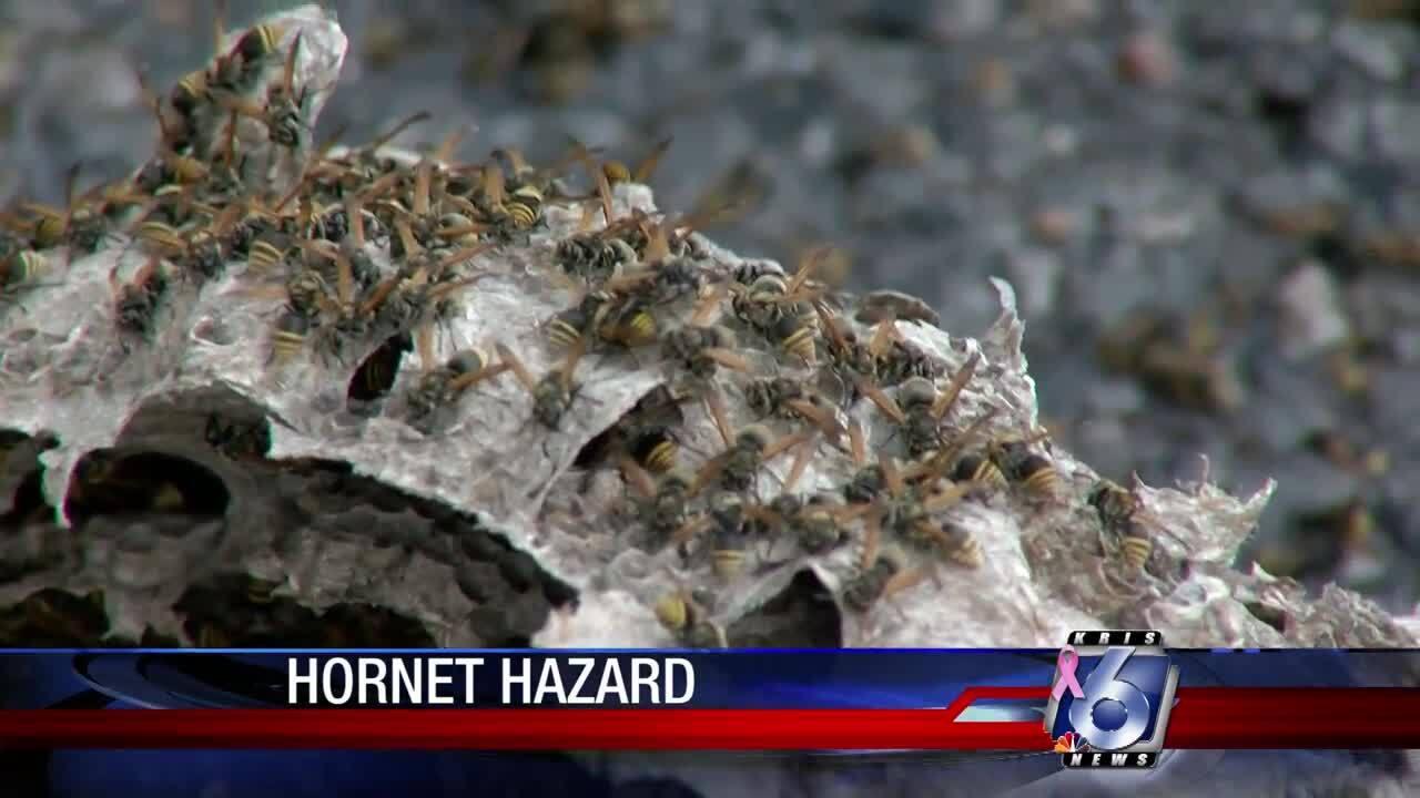 Hornets' nest near Fannin Elementary School