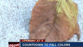 Countdown to fall colors
