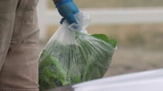 Emerge Hydroponics is giving away fresh lettuce twice a day in Black Forest
