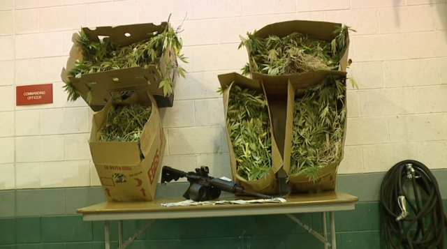 Photo gallery: Detroit police bust large marijuana grow operation