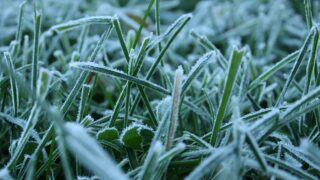 Frost advisories, freeze warnings issued for SLO, Santa Barbara Counties
